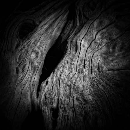 Driftwood Fine Art Black and White Photography
